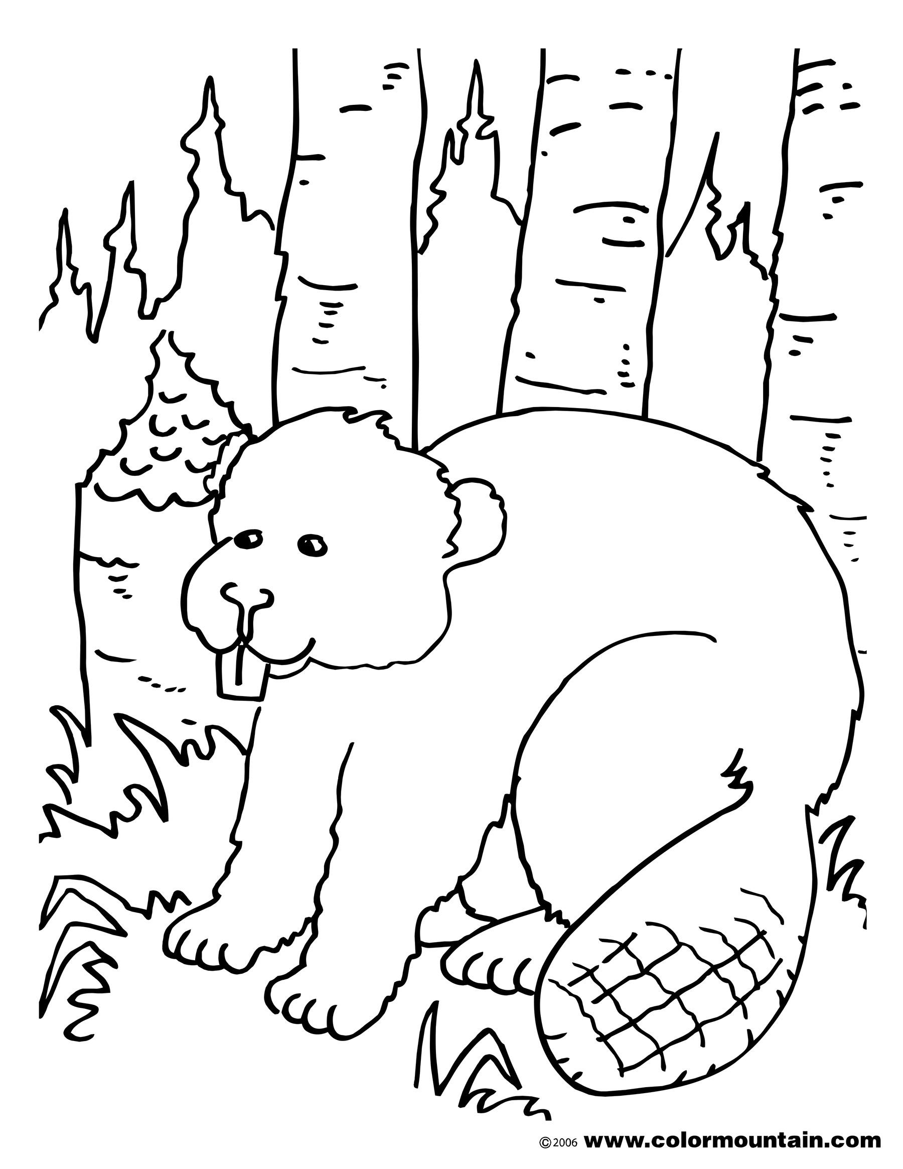 1800x2329 Big Beaver Coloring Page