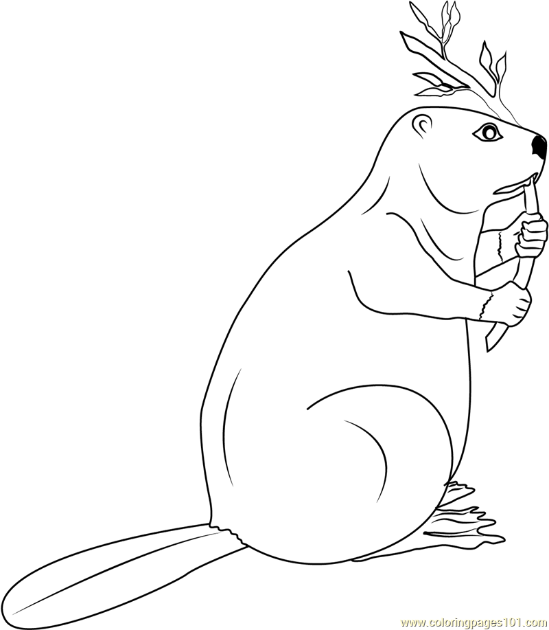 800x917 Canadian Beaver Coloring Page