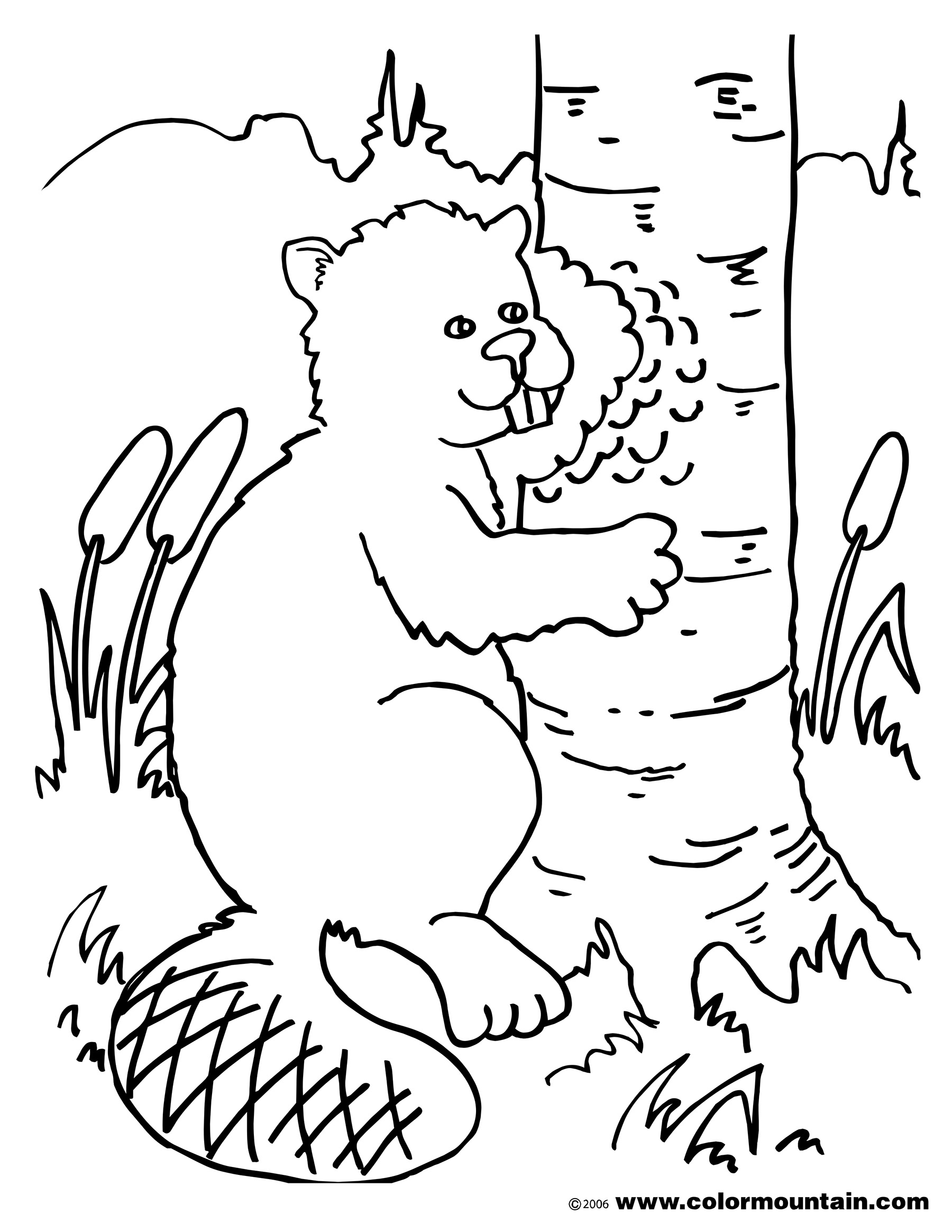 1800x2329 Chewing Beaver Coloring Picture