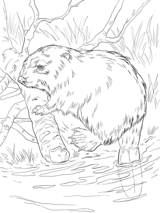 323x430 Click To See Printable Version Of Eurasian Beaver On A River Bank