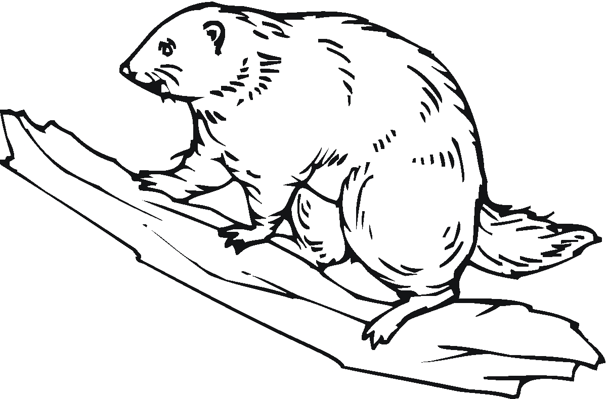 1200x790 New Beaver Coloring Page Collection Printable Coloring Sheet