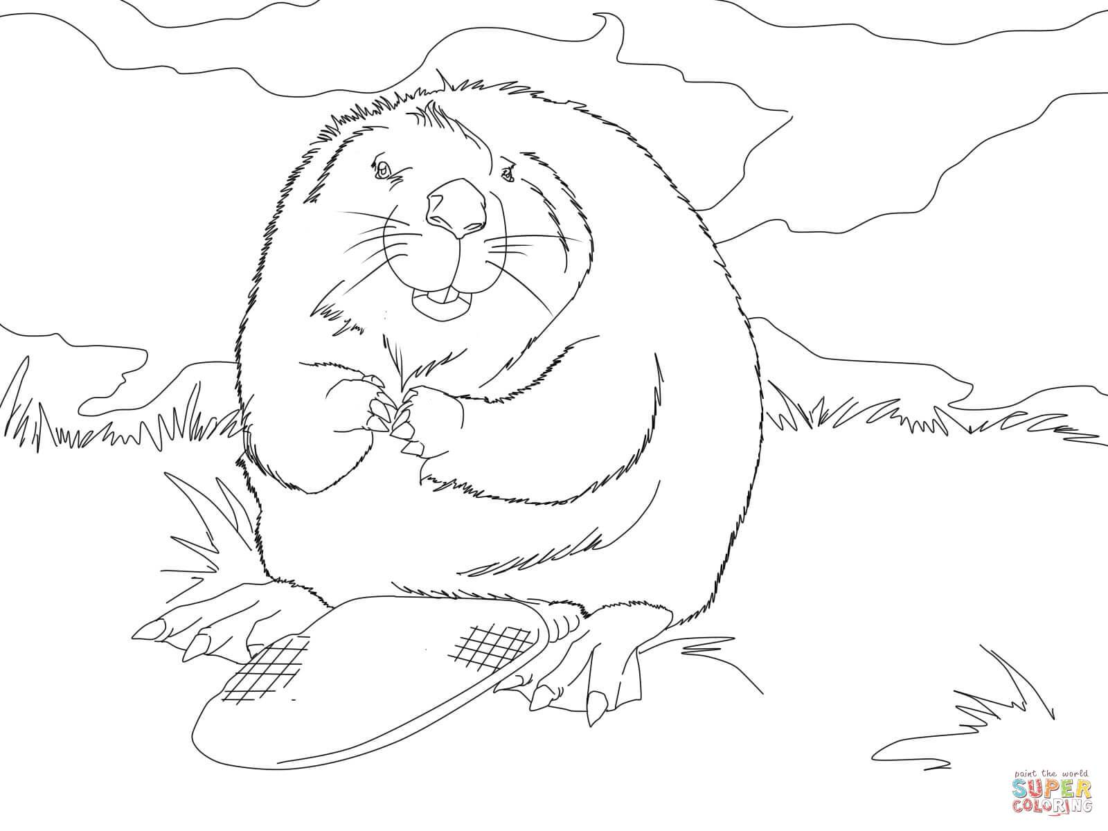 1600x1200 Unbelievable Cute North American Beaver Coloring Page Printable