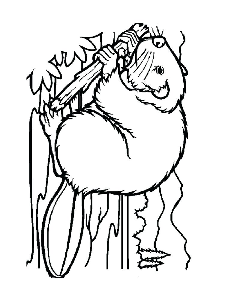 750x1000 Beaver Coloring Page Beaver Coloring Pages Download And Print