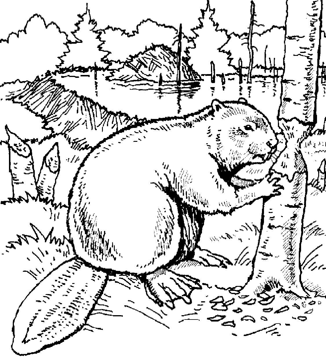 1125x1237 Beaver Coloring Page Education Beaver Scouts