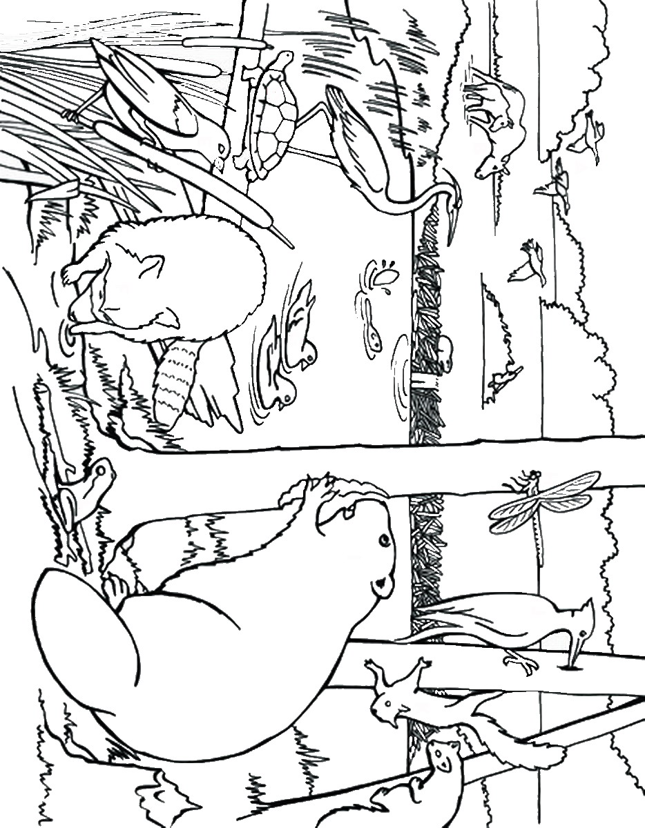934x1200 Beaver Coloring Pages