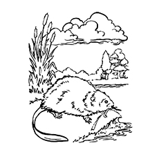 Beaver Dam Coloring Page