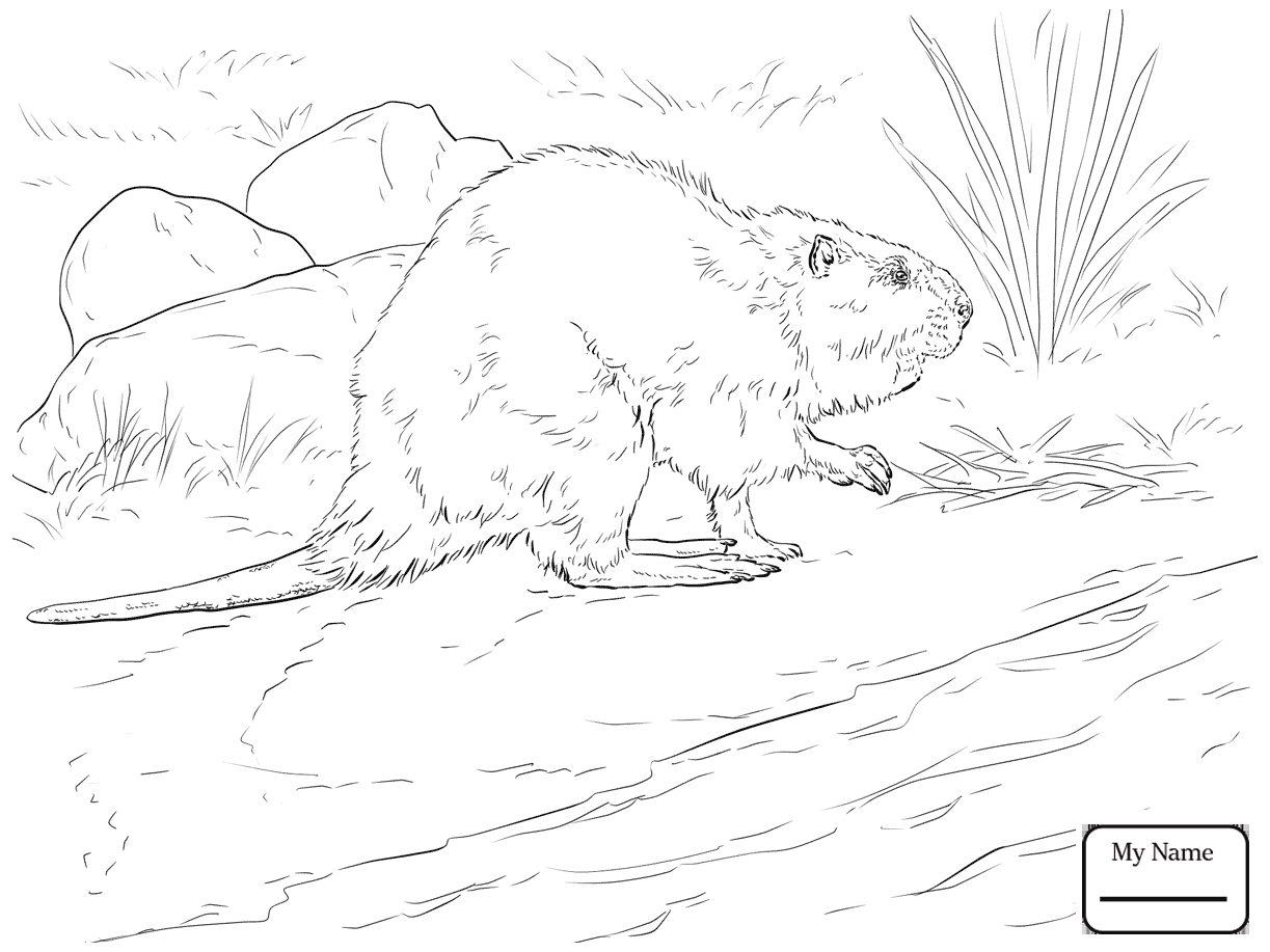 1223x917 Best Of American Beaver Coloring Pages Gallery Printable