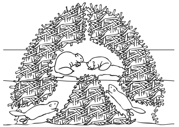 750x531 Coloring Page Beaver Nest