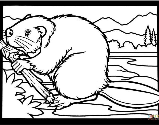 678x534 Pictures Of Beavers To Color Free Coloring Page