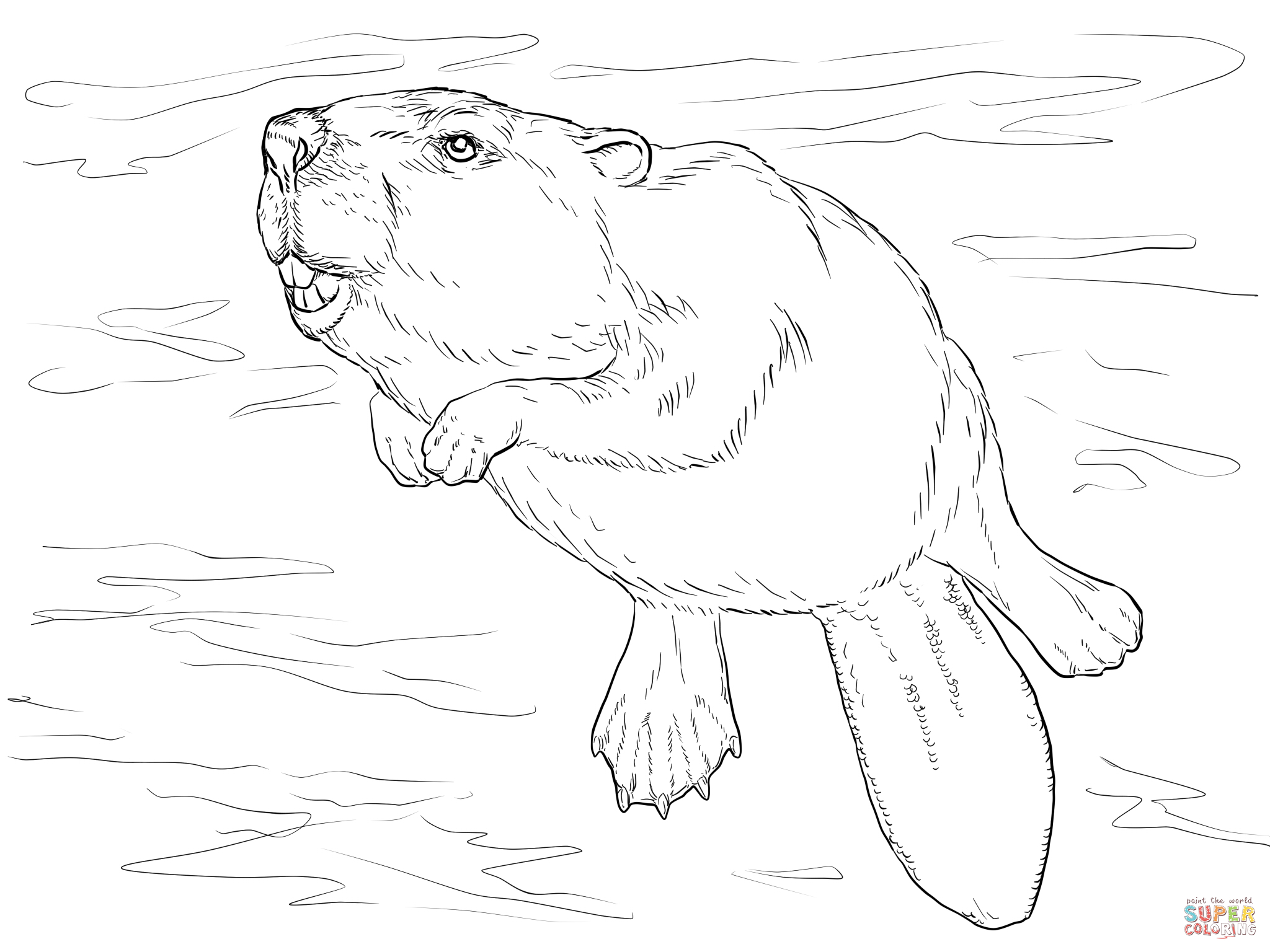 2048x1536 Swimming Beaver Coloring Page Education