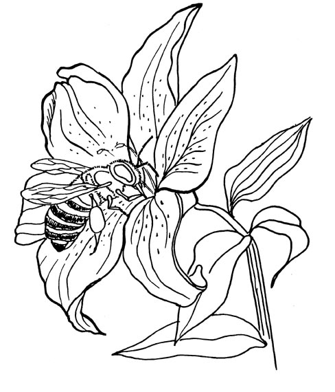 488x570 Bee And Flower Coloring Page