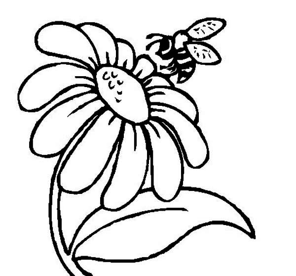 600x558 Mr Bee And A Daisy Flower Coloring Page