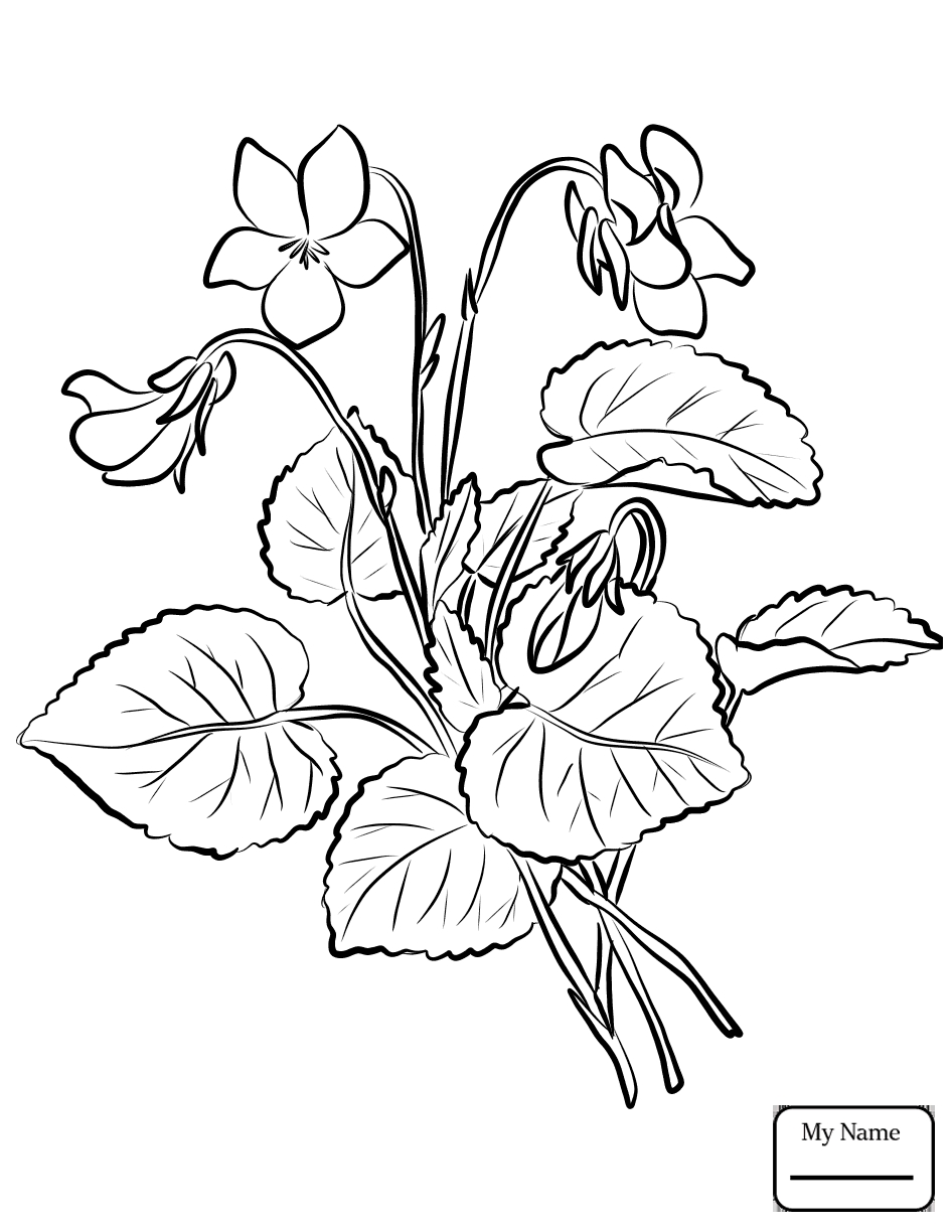 946x1224 New Violet Flower Coloring Pages Gallery Printable Coloring Sheet