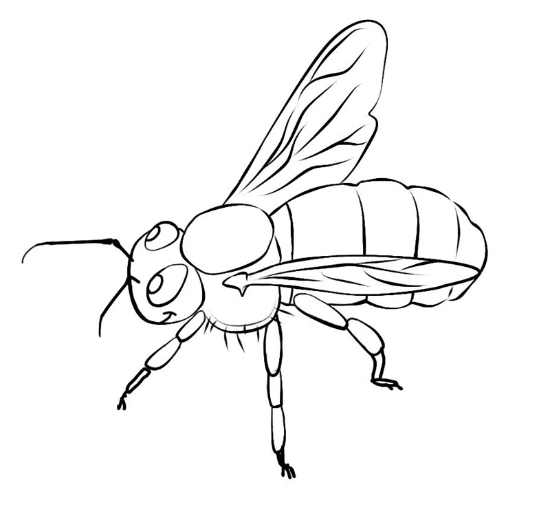 800x753 Free Printable Bee Coloring Pages For Kids