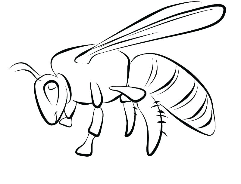 800x612 Honey Bee Coloring Page Cartoon Bee Collecting Nectar From Flower