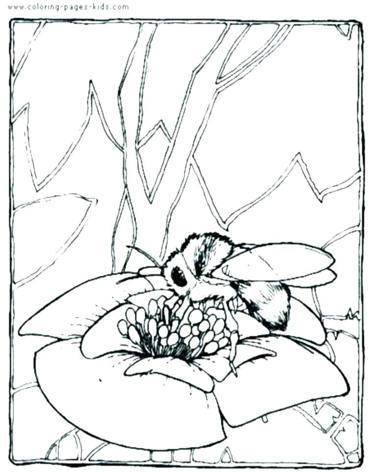768x960 Insects Coloring Pages Bee Coloring Sheet Insects Coloring Pages