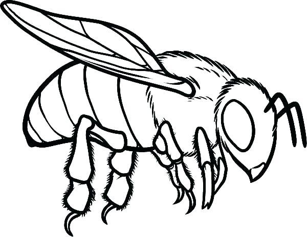 600x464 Bumble Bee Coloring Sheet