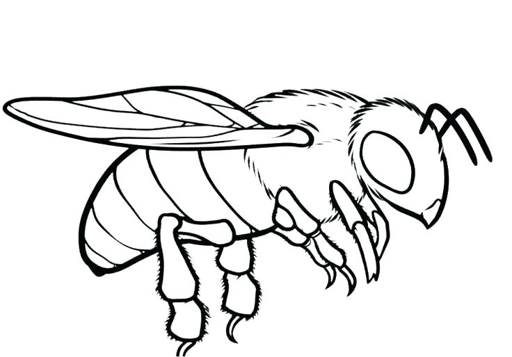 736x514 Honey Bee Coloring Page Pages Ideal New