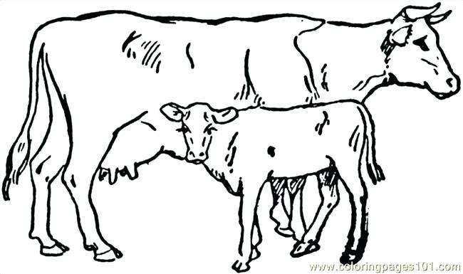 650x385 Cow Coloring Page C Is Cow Coloring Page Coloring Pages