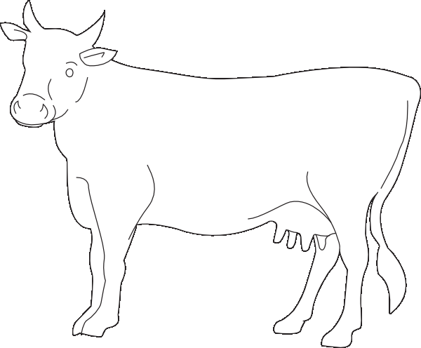 600x496 Cow Coloring Pages