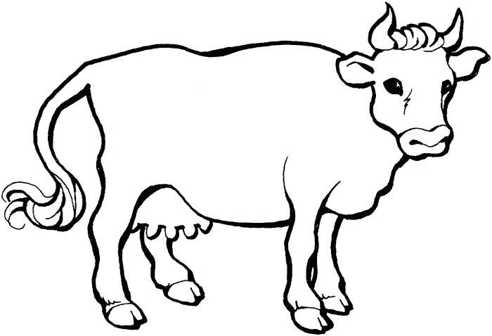 700x478 Cattle Coloring Pages
