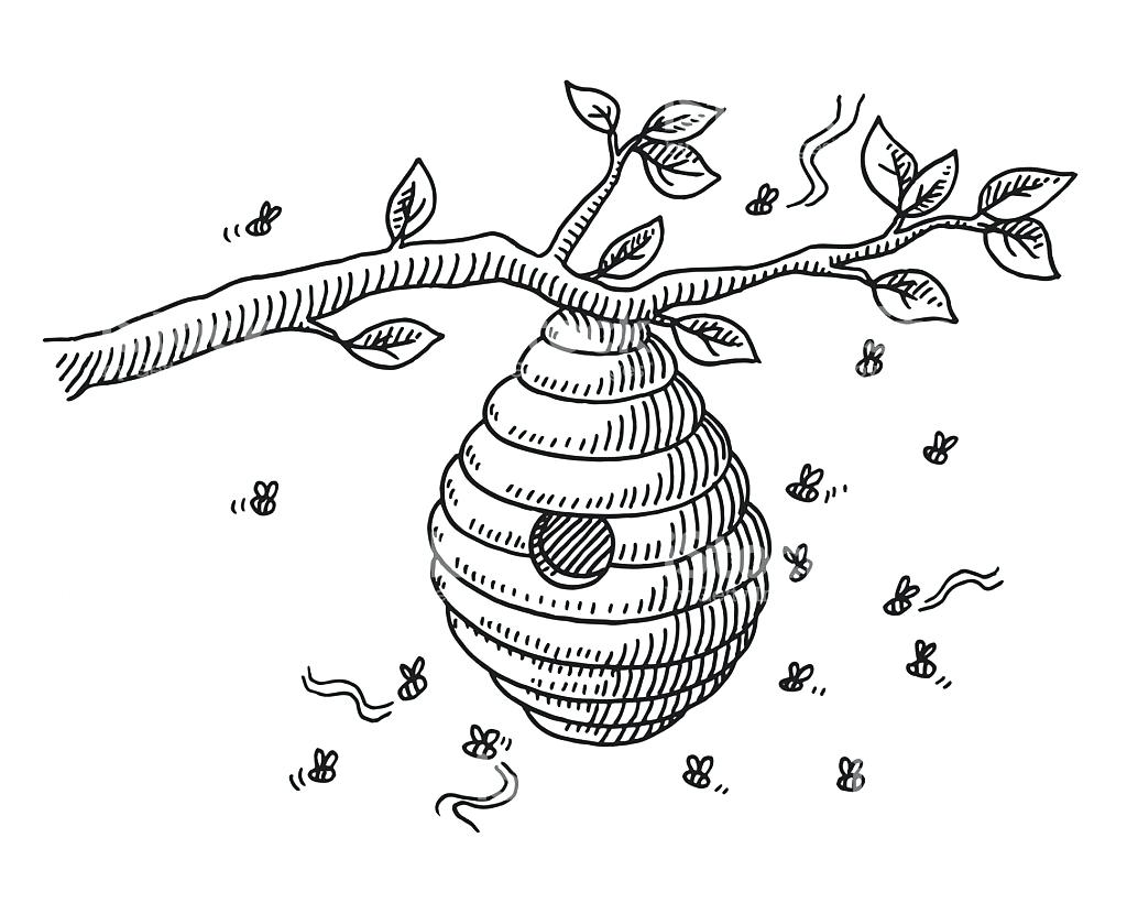 1024x820 Coloring Pages For Teens Bee Hive Line Drawing Pencil And In Color