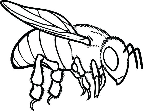 600x464 Honey Bee Coloring Page Honey Bee Coloring Trend Honey Bee