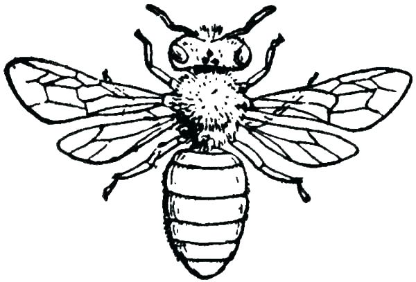 600x407 Coloring Beehive Coloring Page Bee Pages Printable Bees Honey