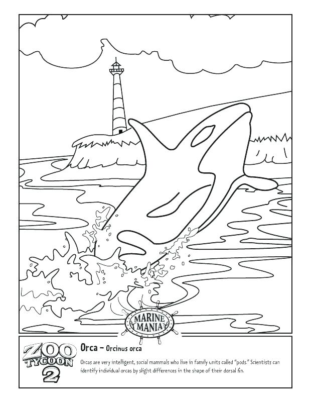 618x800 Orca Whale Coloring Pages Whale Coloring Pages Ntable Killer Whale