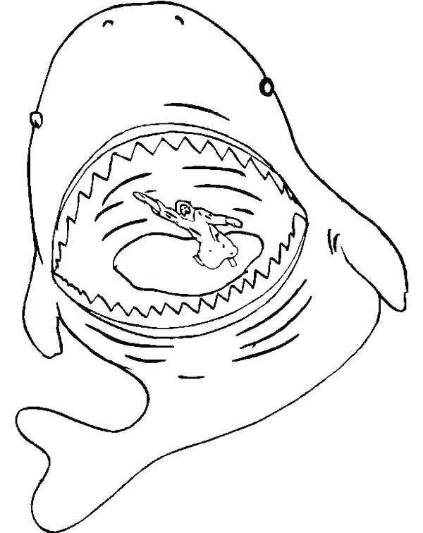 600x756 Whale Color Page Cartoon Beluga Whale Free Printable Whale Free