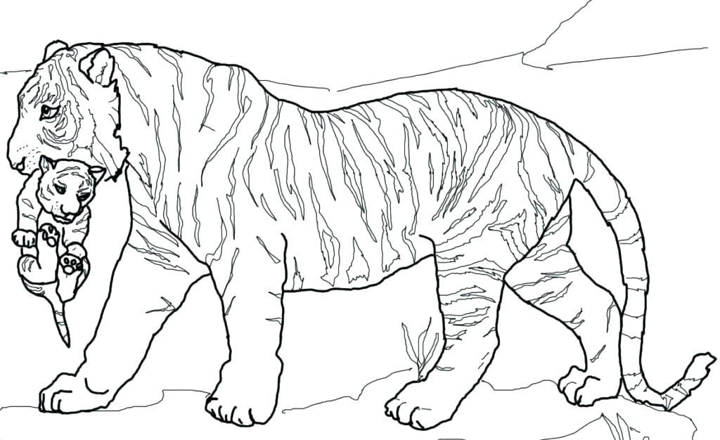 1024x626 Coloring Pages Tiger Tiger Cub Coloring Pages Tiger Cub Coloring