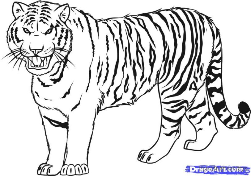 812x571 Tiger Pictures To Color Sweet Looking Bengal Tiger Coloring Pages