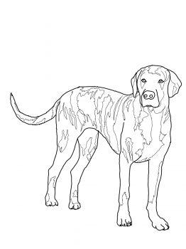 Bernese Mountain Dog Coloring Pages