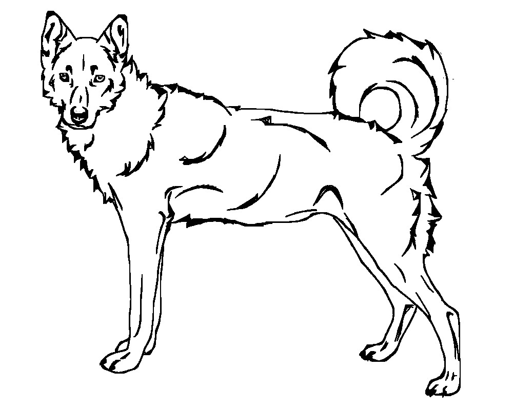 1000x800 Siberian Husky Dog Coloring Page How To Draw Squirt From Finding