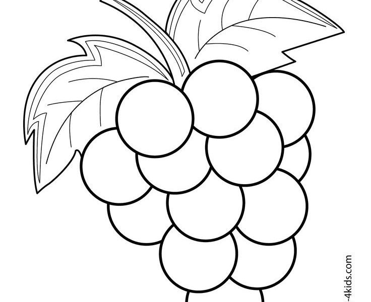 736x600 Fruit Coloring Pages Grapes Fruits And Berries Coloring Pages
