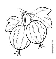 236x248 Gooseberry Fruits And Berries Coloring Pages For Kids, Printable