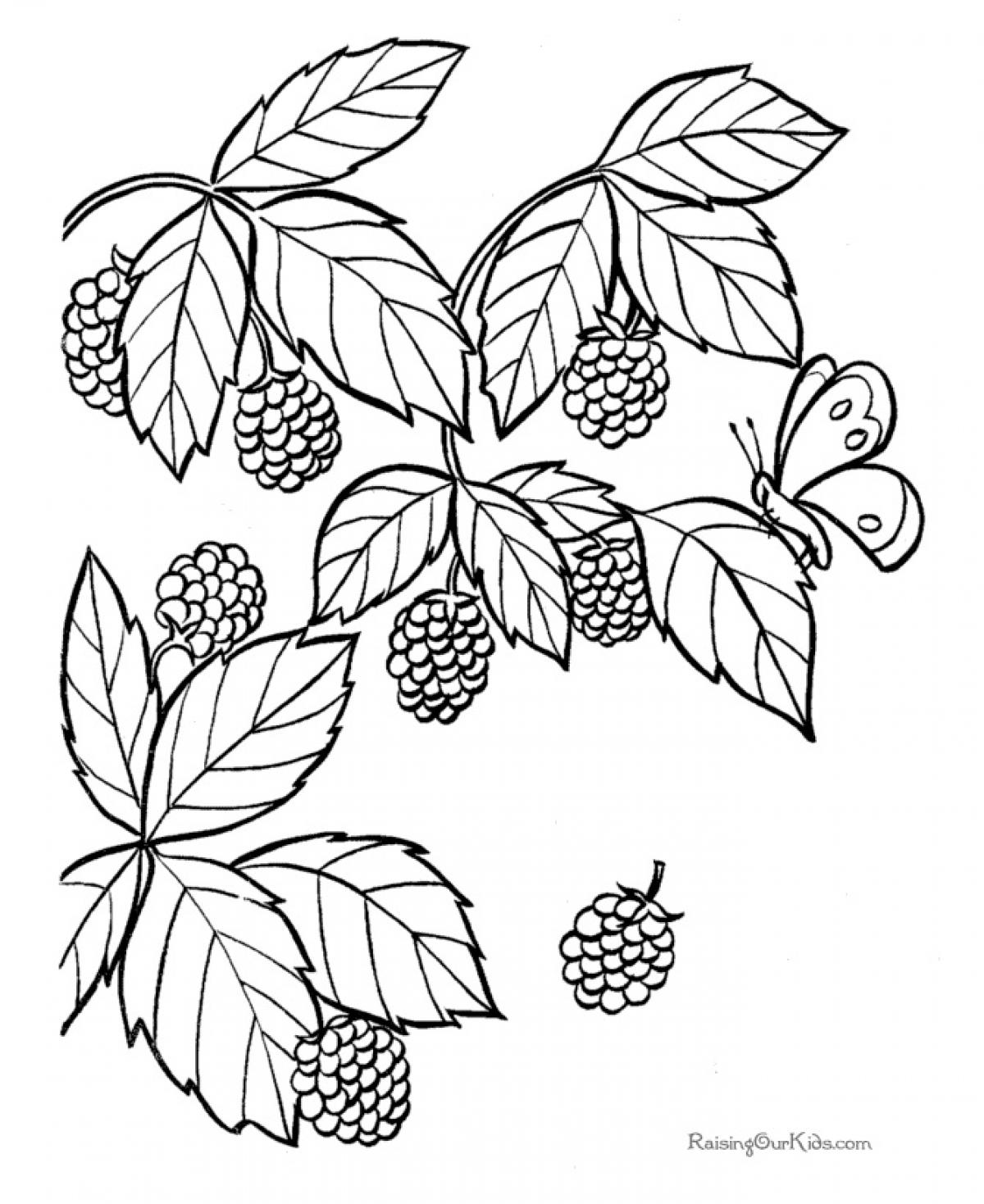 1200x1469 Immediately Blackberry Coloring Page Raspberry With Flowers Fruits