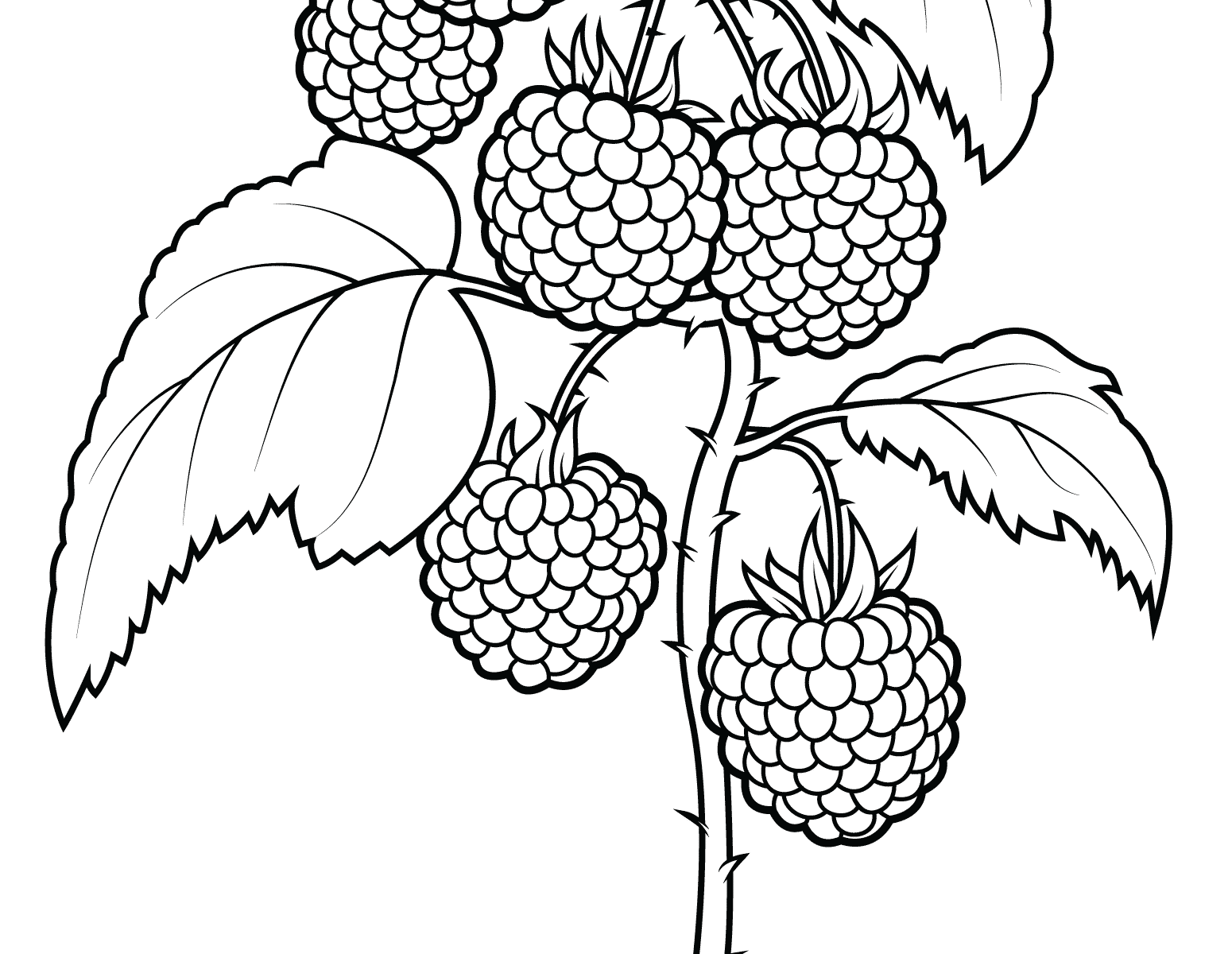 1550x1200 Raspberry With Flowers Fruits And Berries Coloring Pages For Kids