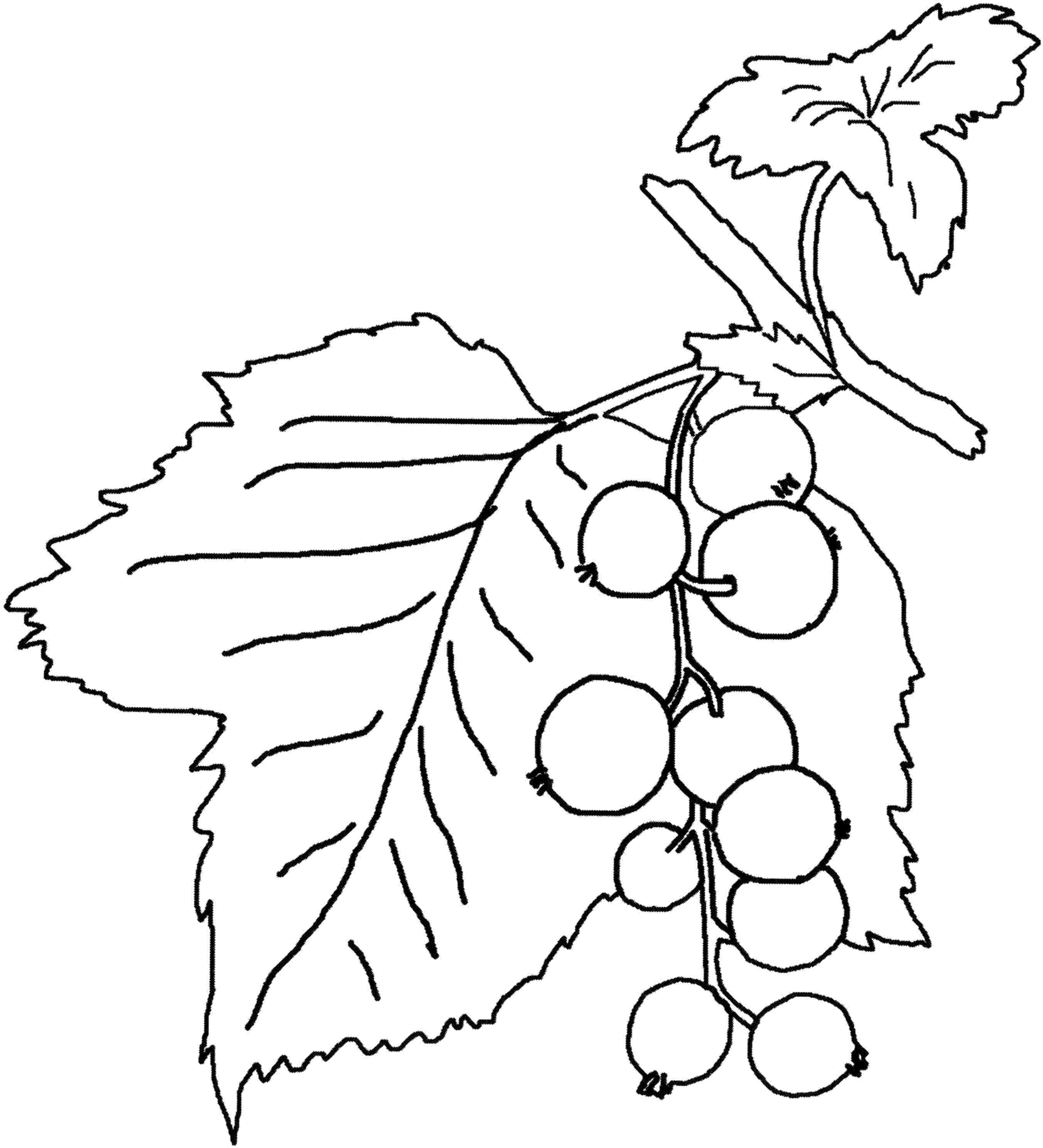 2704x2975 Unusual Inspiration Ideas Berry Coloring Pages Fruit And Berries