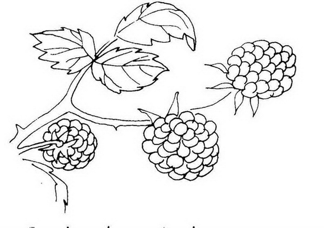 1048x739 Berries Berry Coloring Pages Girls Coloring Pages