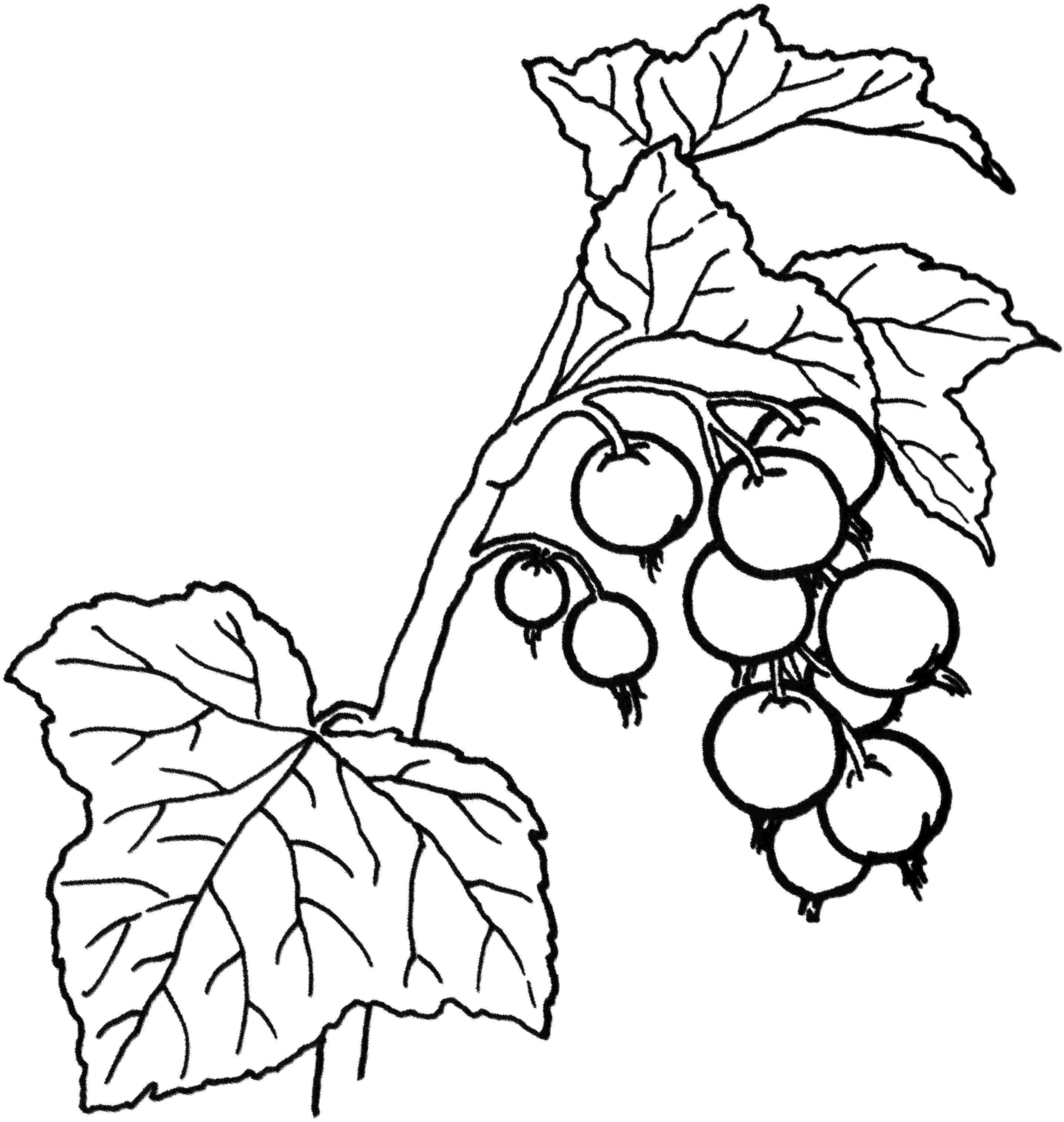 2873x3030 Berries Coloring Pages M Clanberry Fruits And For Kids Best