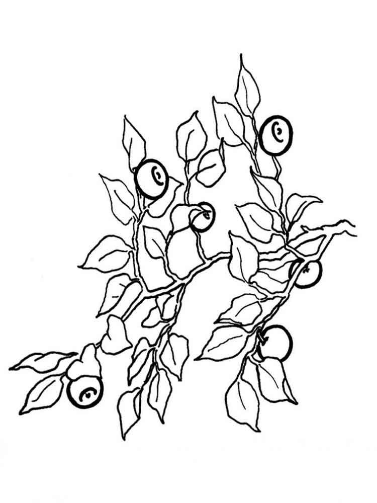 750x1000 Blueberry Coloring Pages Download And Print Blueberry Coloring Pages