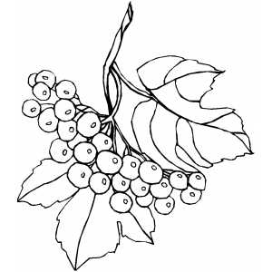 300x300 Branch And Berries Coloring Page