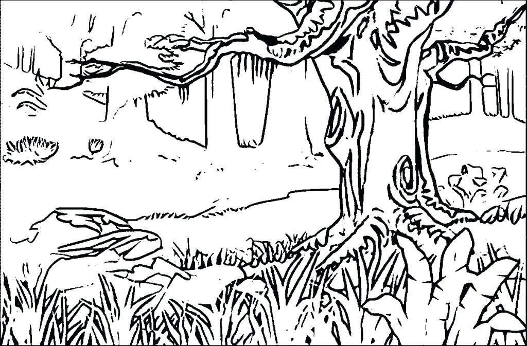 1024x673 Rainforest Animal Coloring Pages Coloring Page Best Coloring Pages