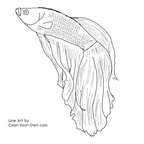 500x500 Siamese Fighting Fish Coloring Pages Betta Fish Im Gonna Try