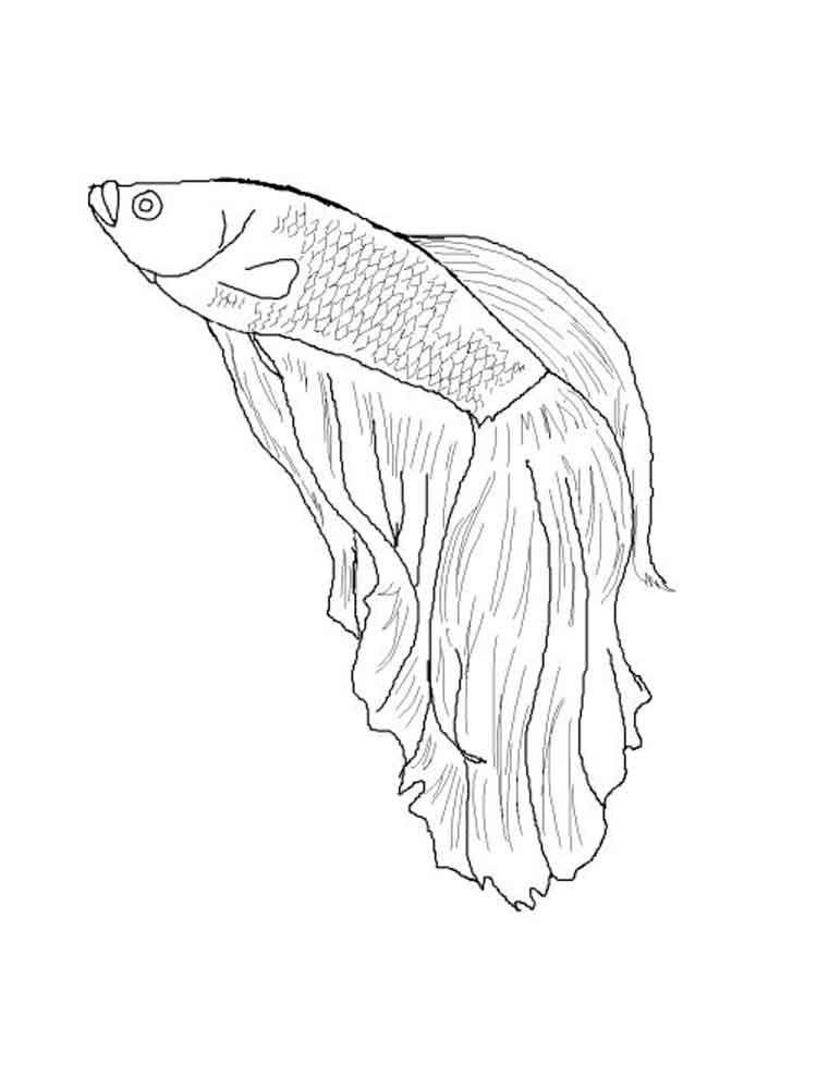 750x1000 Betta Fish