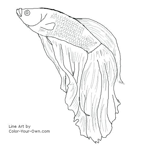 500x500 Betta Fish Coloring Pages Betta Fish Coloring Sheets