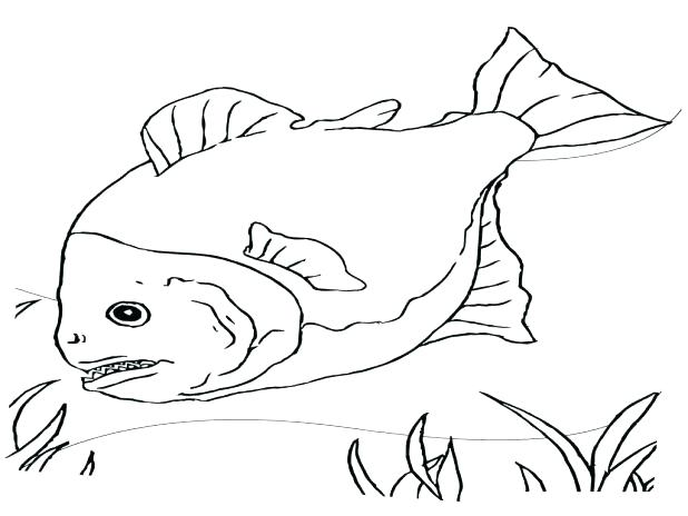 618x464 Betta Fish Coloring Pages Betta Fish Colouring Pages