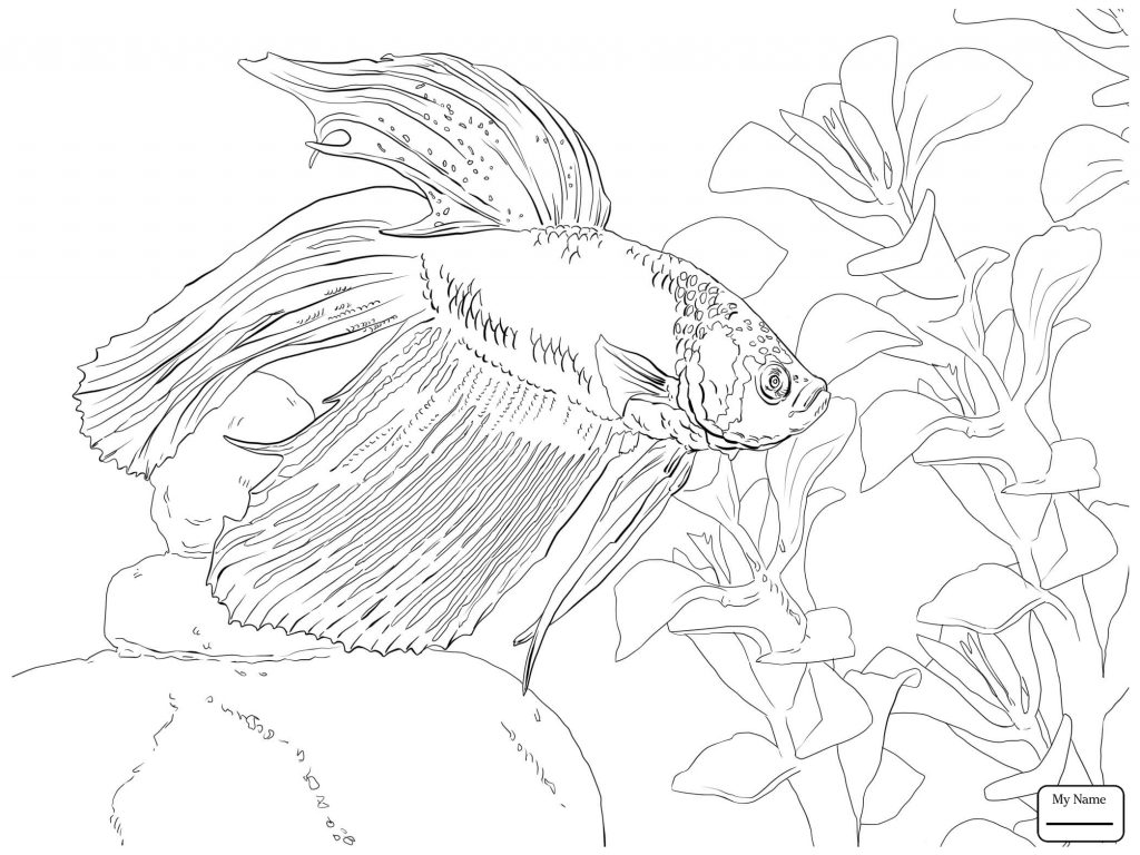 1024x768 Betta Fish Coloring Pages