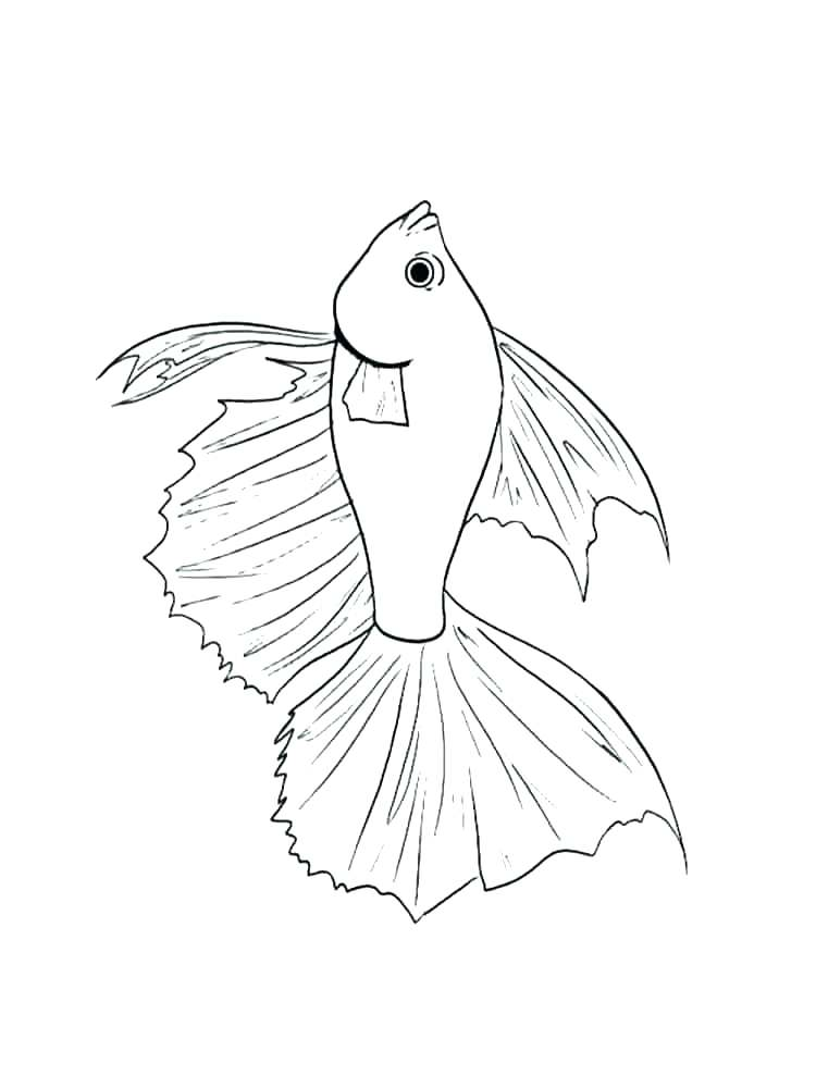 750x1000 Betta Fish Colouring Pages Kids Coloring Fish Coloring Page